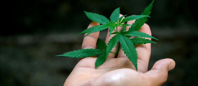 OlarteMoure - Registro de marcas cannabis - Estados Unidos